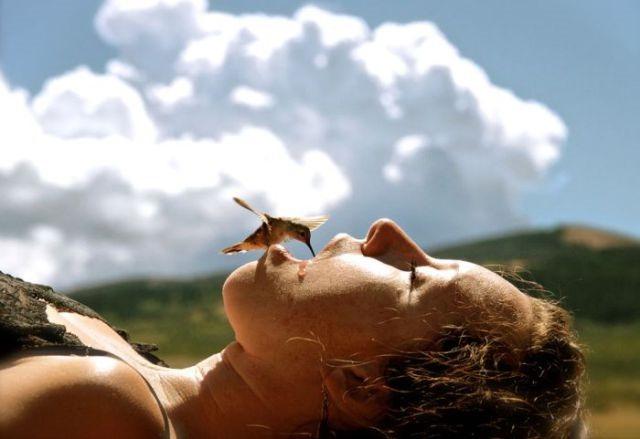 fotos viajantes beija flor[8]