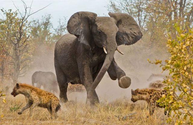 fotos viajantes elefante[4]