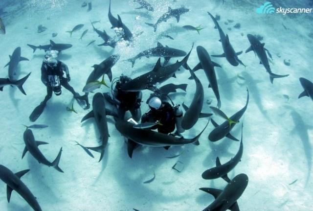 8 - Mergulhar com tubarões.