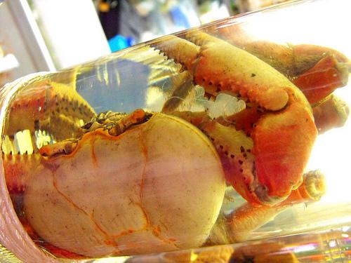 Pinga com caranguejo