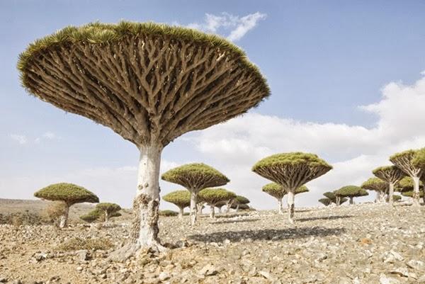 24 - Socotra Yemen